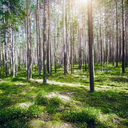 Summer forest jungle. Plants and trees background
