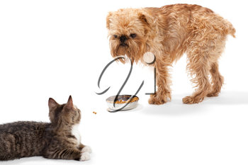 Kitten and puppy share food, isolated on white background