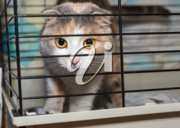 Beautiful lop-eared cat in a cage animal shelter