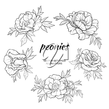 vector set  with  peonies on white background