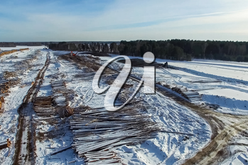 The felled trees lie under the open sky. Deforestation in Russia. Destruction of forests in Siberia. Harvesting of wood.