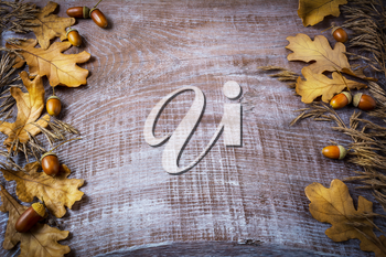 Frame of rye, acorn and fall leaves on dark wooden background. Thanksgiving background with seasonal symbols.