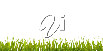 Bright detailed green grass, seamless border isolated on white