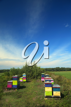 Nice and colourful wood hive box in a field with a nice blue sky